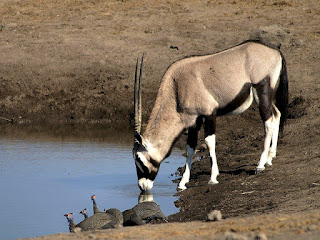 gemsbok is found in Uganda