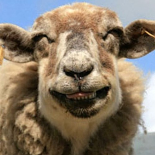 cooloddee: Funny Laughing Animals!