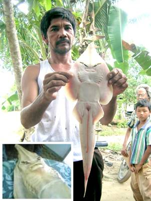 Aneh en Ajaib: Aneh, Ikan Pari Mirip Wajah Manusia