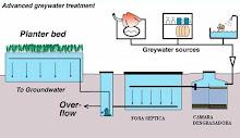 Juncos para potabilizar el agua en plantas depuradoras 3