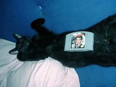 Kucing Terencat
