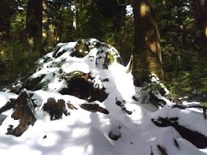 Wilson Stump in the snow
