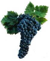 Resultado de imagen de uva tinta de toro