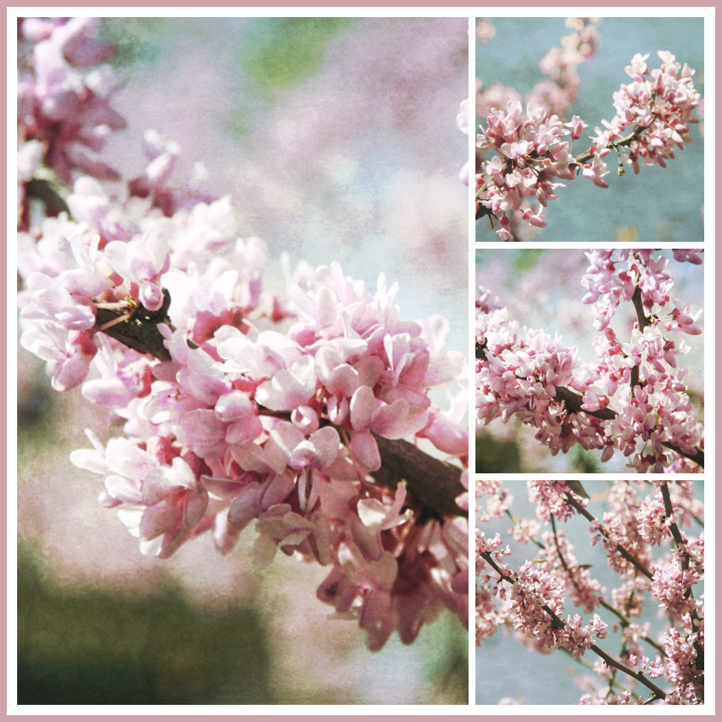 Springtime With Grandchildren And Beautiful Blooming Eastern Redbud