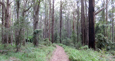 Olinda Falls - Dandenong Ranges National Park