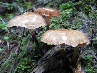Funghi at Brimbank Park