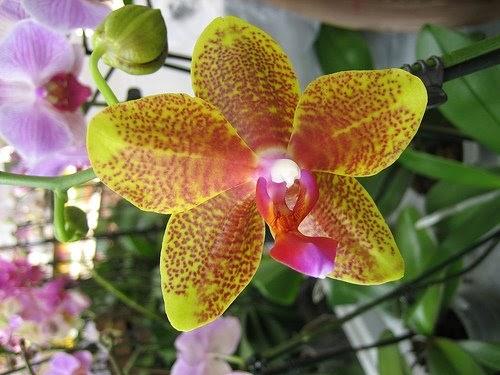 Come coltivare le orchidee da seme. - GIARDINAGGIO ...