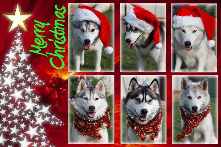 Precious Pics Photo Contest Winners Design A Christmas Card