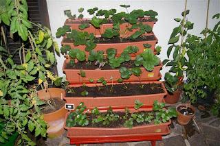 Gartenblog Topfgartenwelt Erdbeeren: Erdbeertreppe
