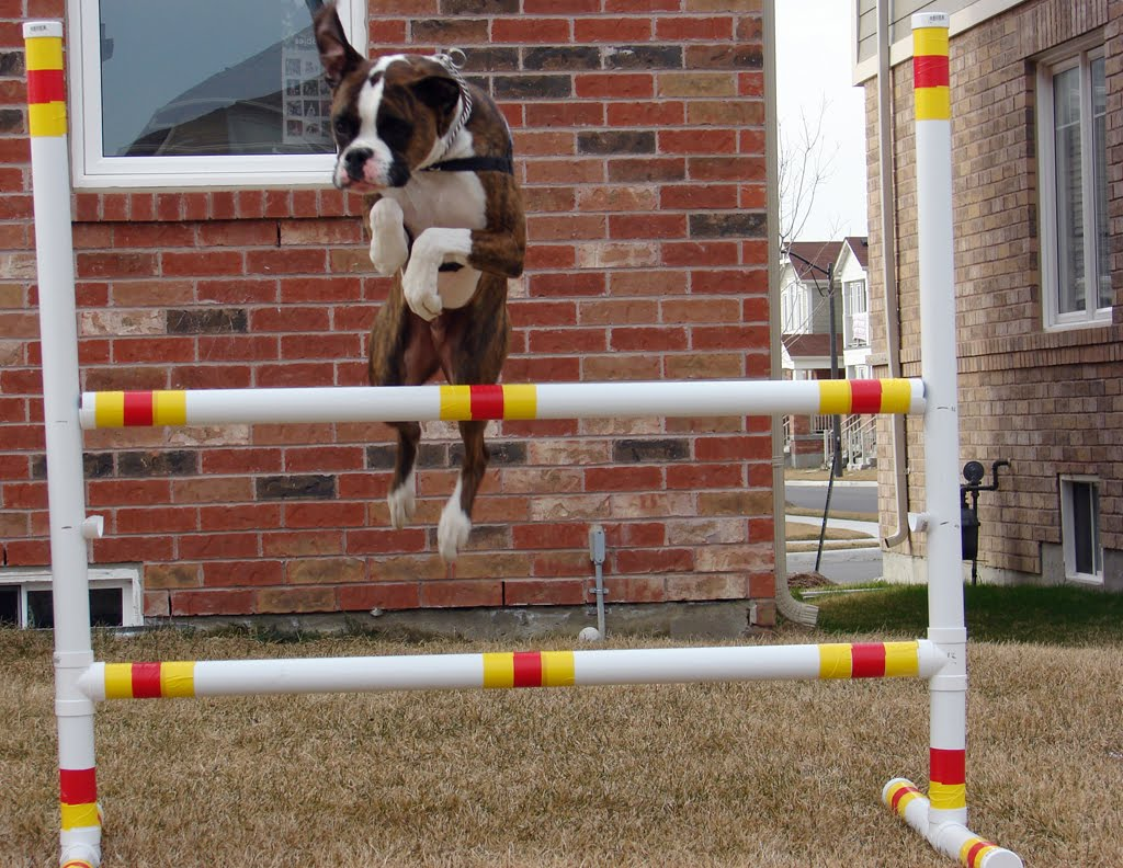 Boxer Dog Stories: DIY Dog Agility Jump