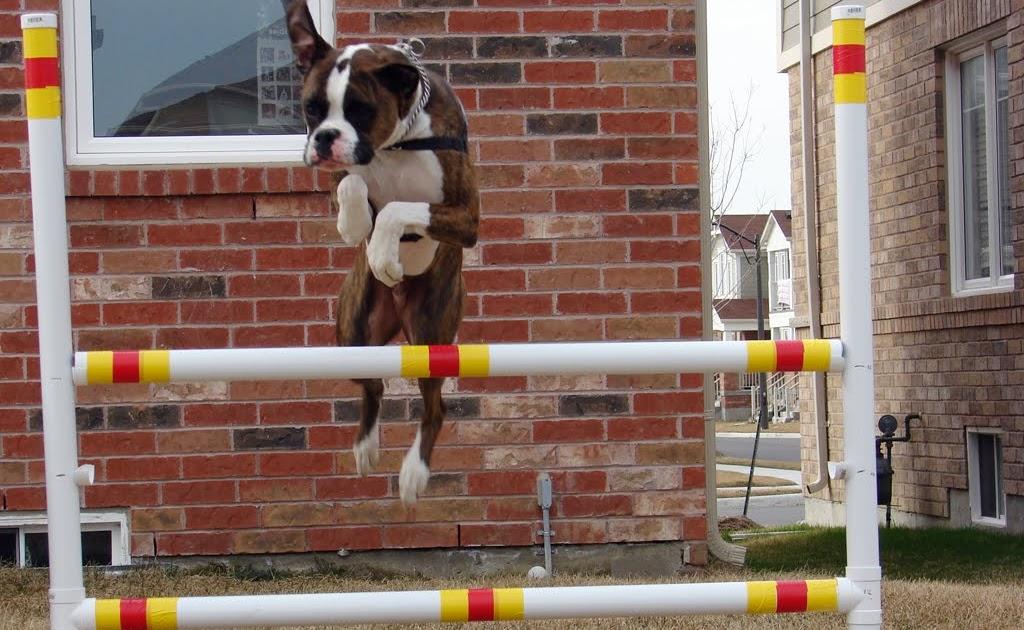 Diy Dog Agility Weave Poles