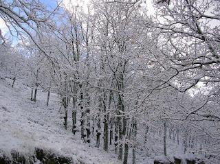 arboles nevados en tornavacas