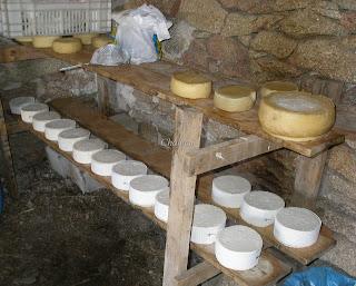 queso de cabra en el valle del jerte