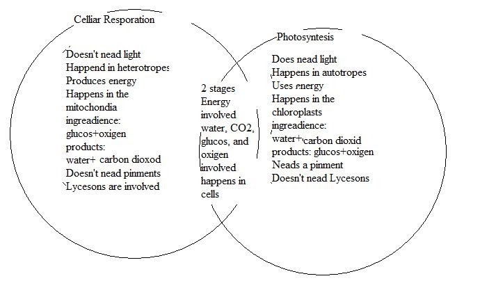 photosynthesis and respiration venn diagram answers