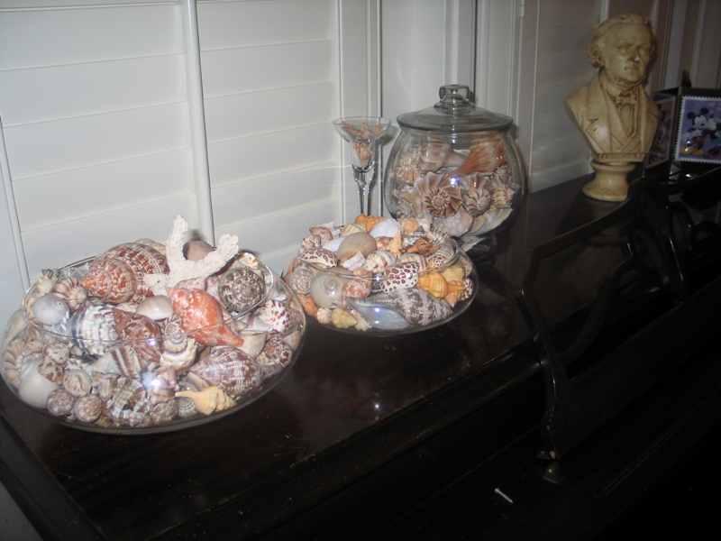 Glass bowls filled with sea shells found on Sanibel Island, including true tulips, banded tulips, Florida horse conchs, lightening whelks, king's crowns, moon snail, nutmeg shell, alphabet cone and many others.
