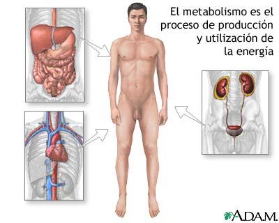 Nuevo artículo revela lo más bajo en Dieta cetogénica y por qué debe tomar medidas hoy