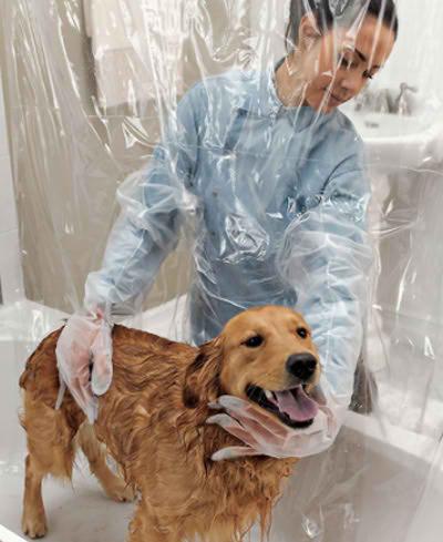 Resultado de imagen para bañando perros