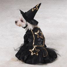 perro con disfraz de bruja