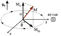 magnetization vector resolved into its components horizontal Mxy and a vertical Mz