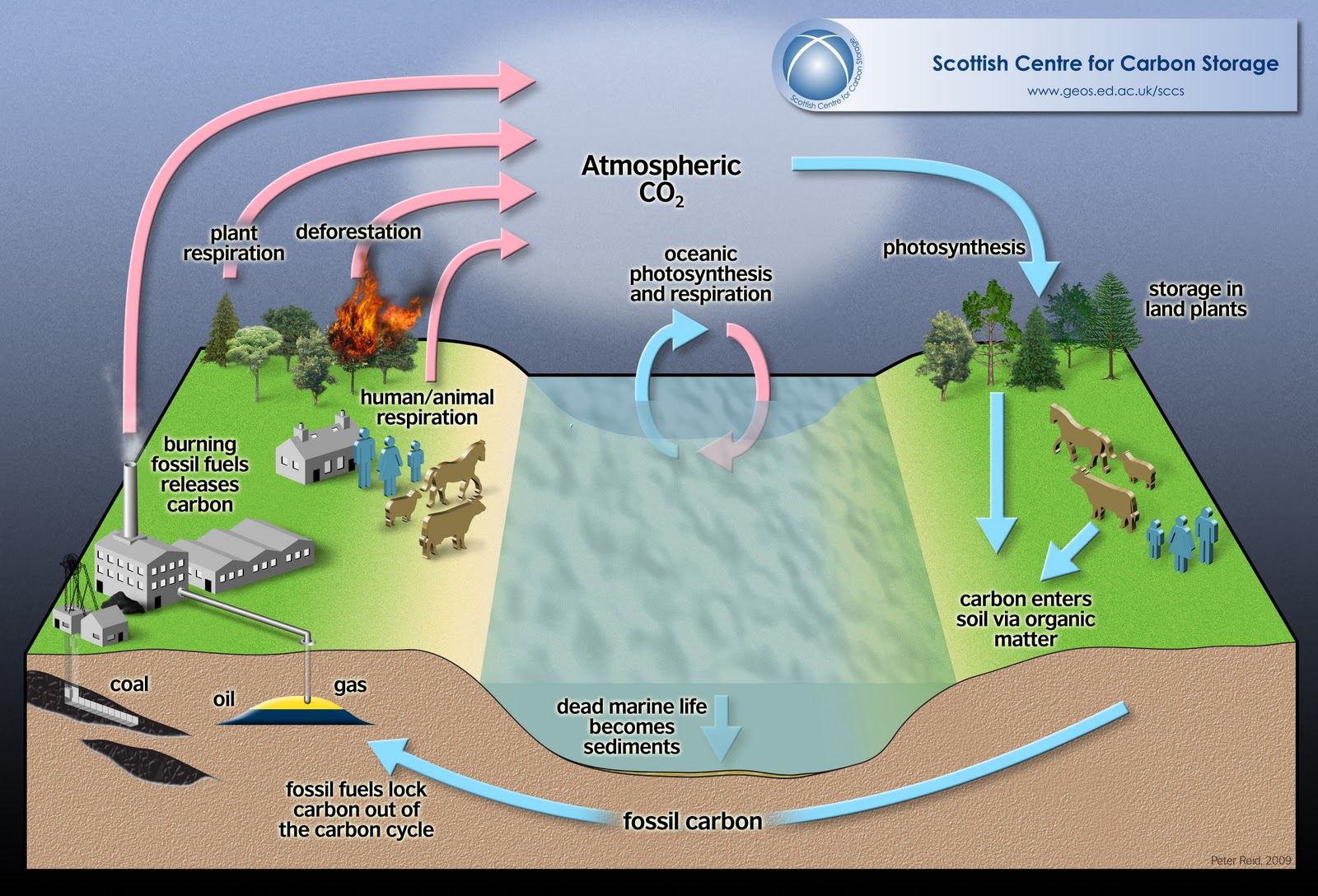 Biosphere Atmosphere And Hydrosphere The Carbon Cycle