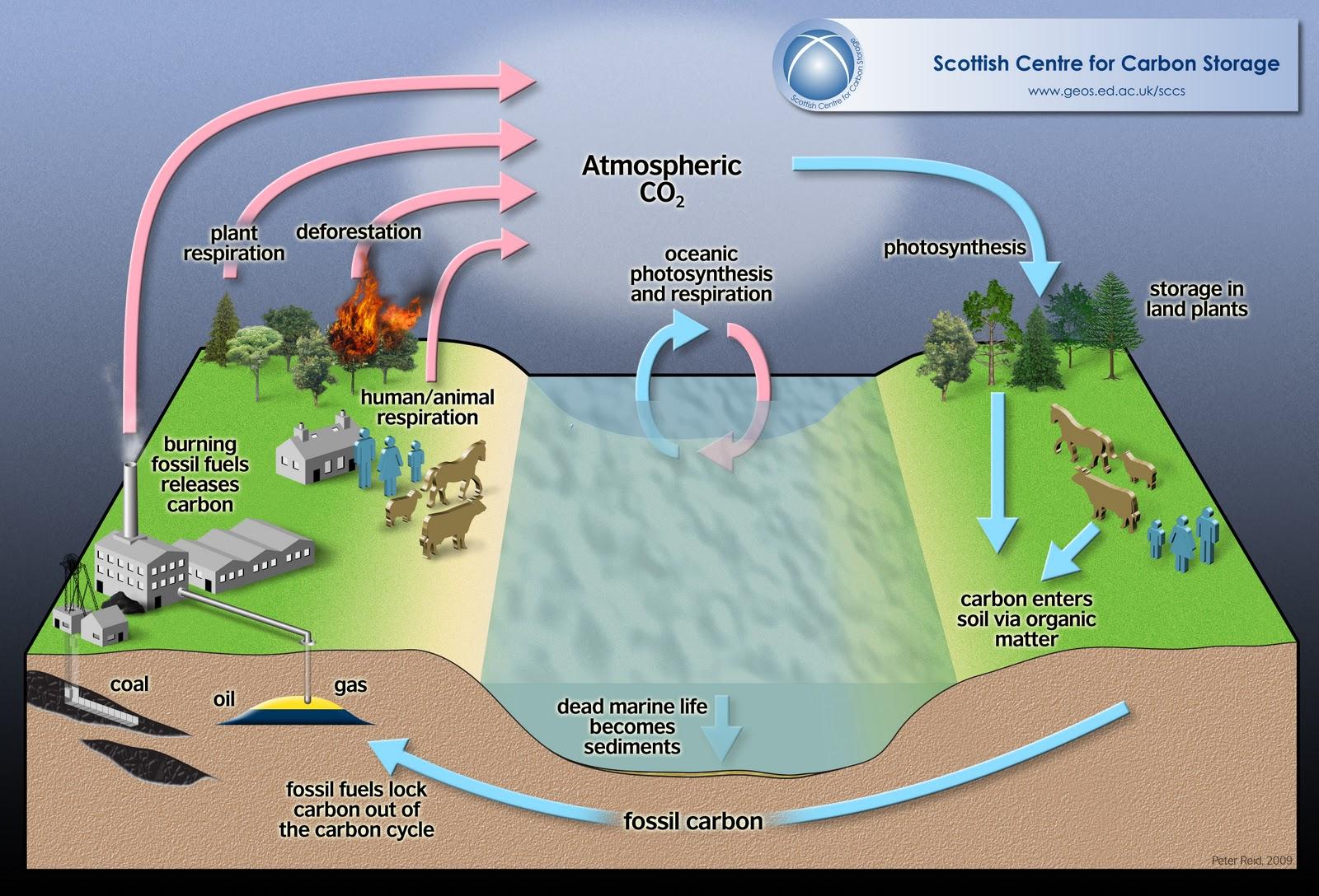 hydrosphere lithosphere atmosphere diagram pop up camper wiring jayco biosphere and january 2011