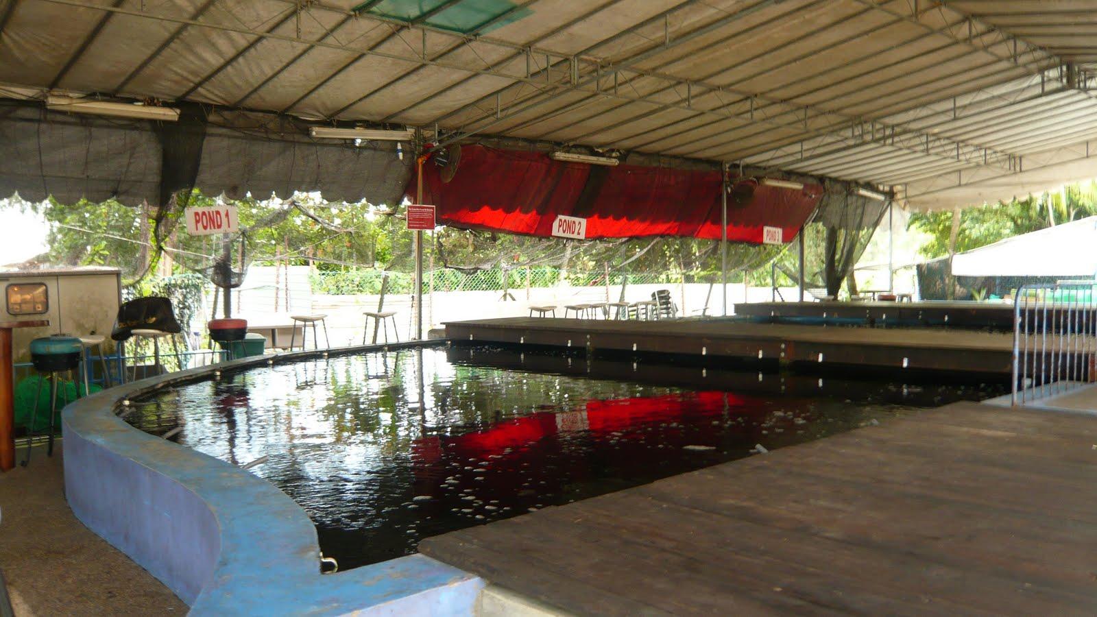 Singapore Local Tour: Farm Tour :- Prawn Fishing