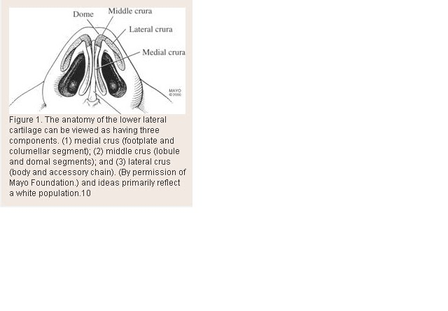 Nose Revision Surgery And Surgeons  The Anatomy And