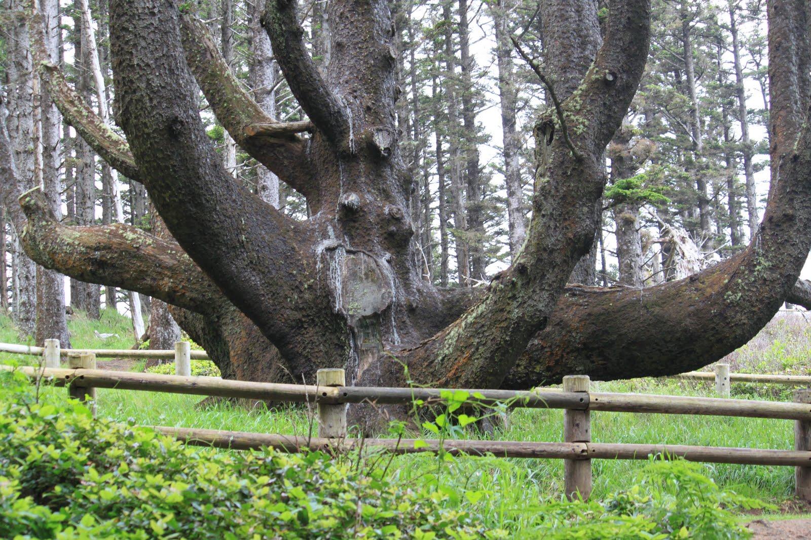 7 Pohon Paling Misterius Dan Sangat Fenomenal Dari Berbagai