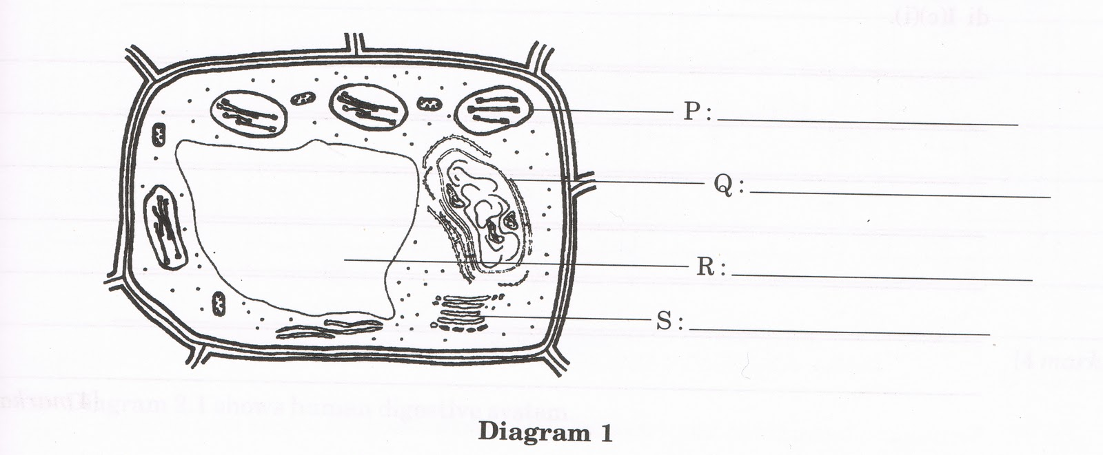 Plant Cell No Labels White Blood Cells Diagram Images Pictures Becuo Photo23