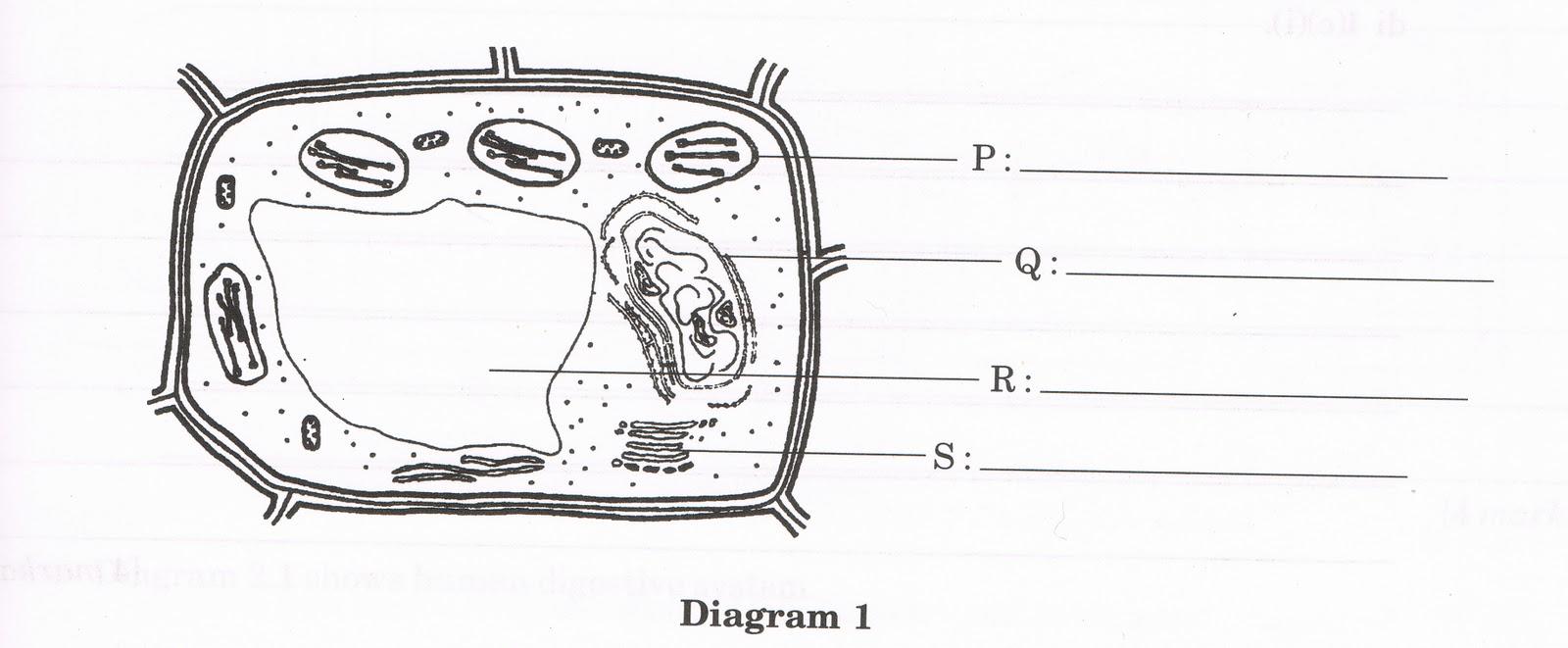 Biology: January 2011