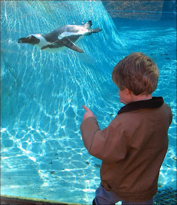 Kid and penguin pool