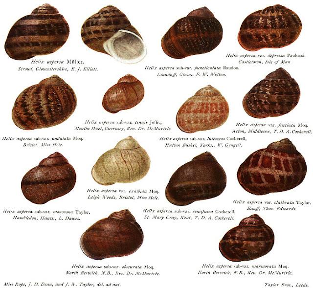 Garden Snail Food List