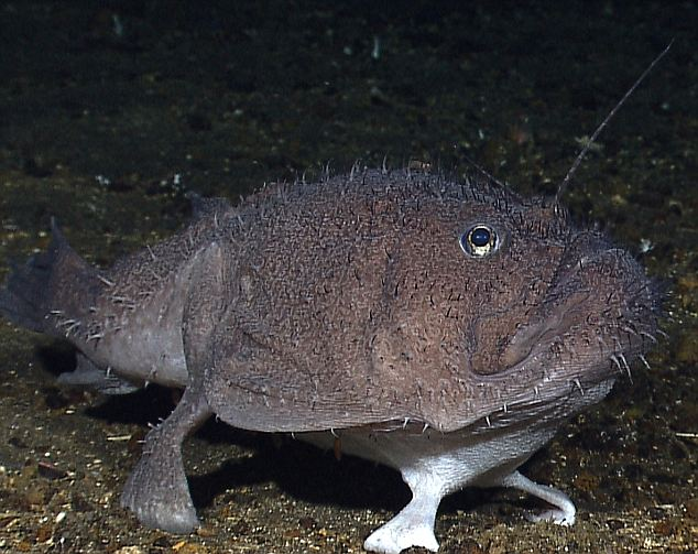 Ugly Overload: Fish with Feet!