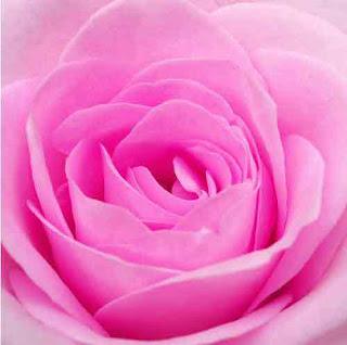 https://i1.wp.com/4.bp.blogspot.com/_yuLXFvZv4oM/SVB4lMF5DuI/AAAAAAAAAAo/NTYfpMsrYlM/s320/bunga.jpg