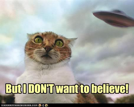 Believe cat