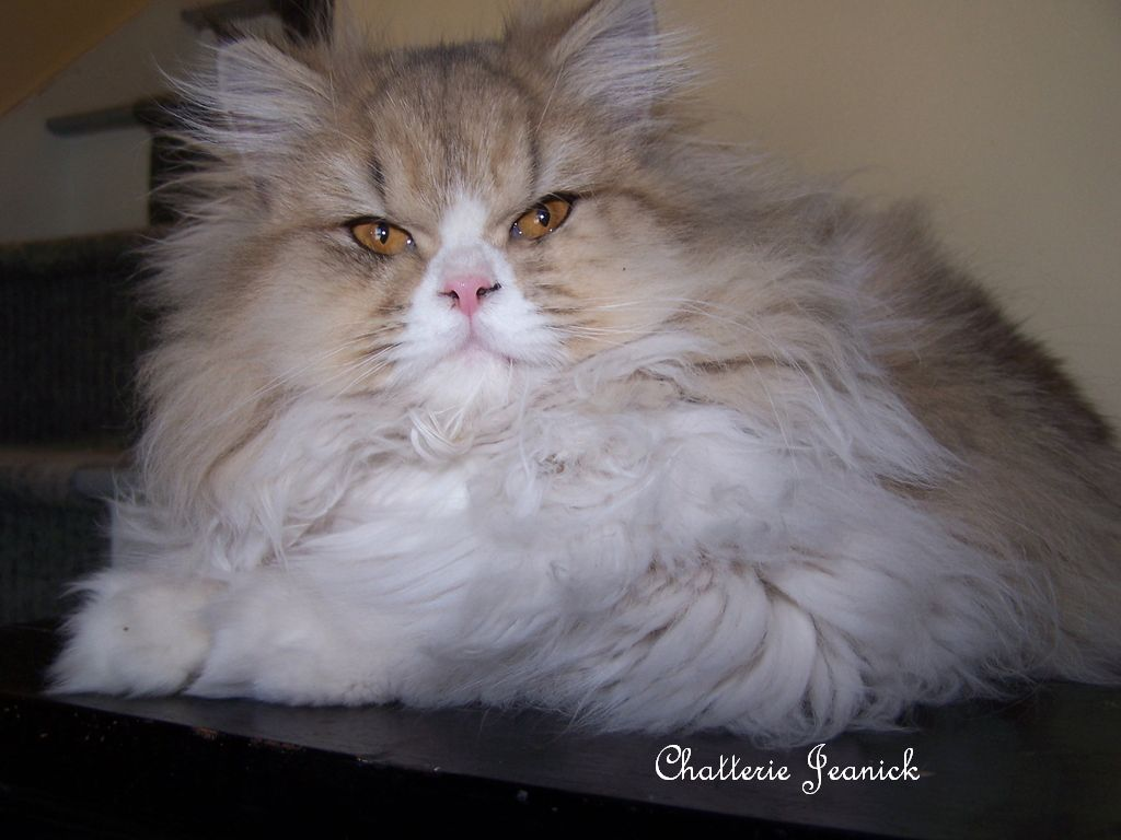 Gratuit putain kitty persan