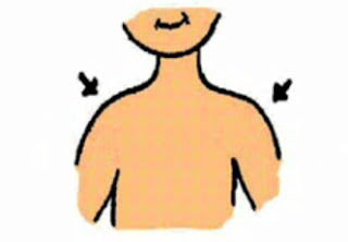 vocabulario partes del cuerpo humano