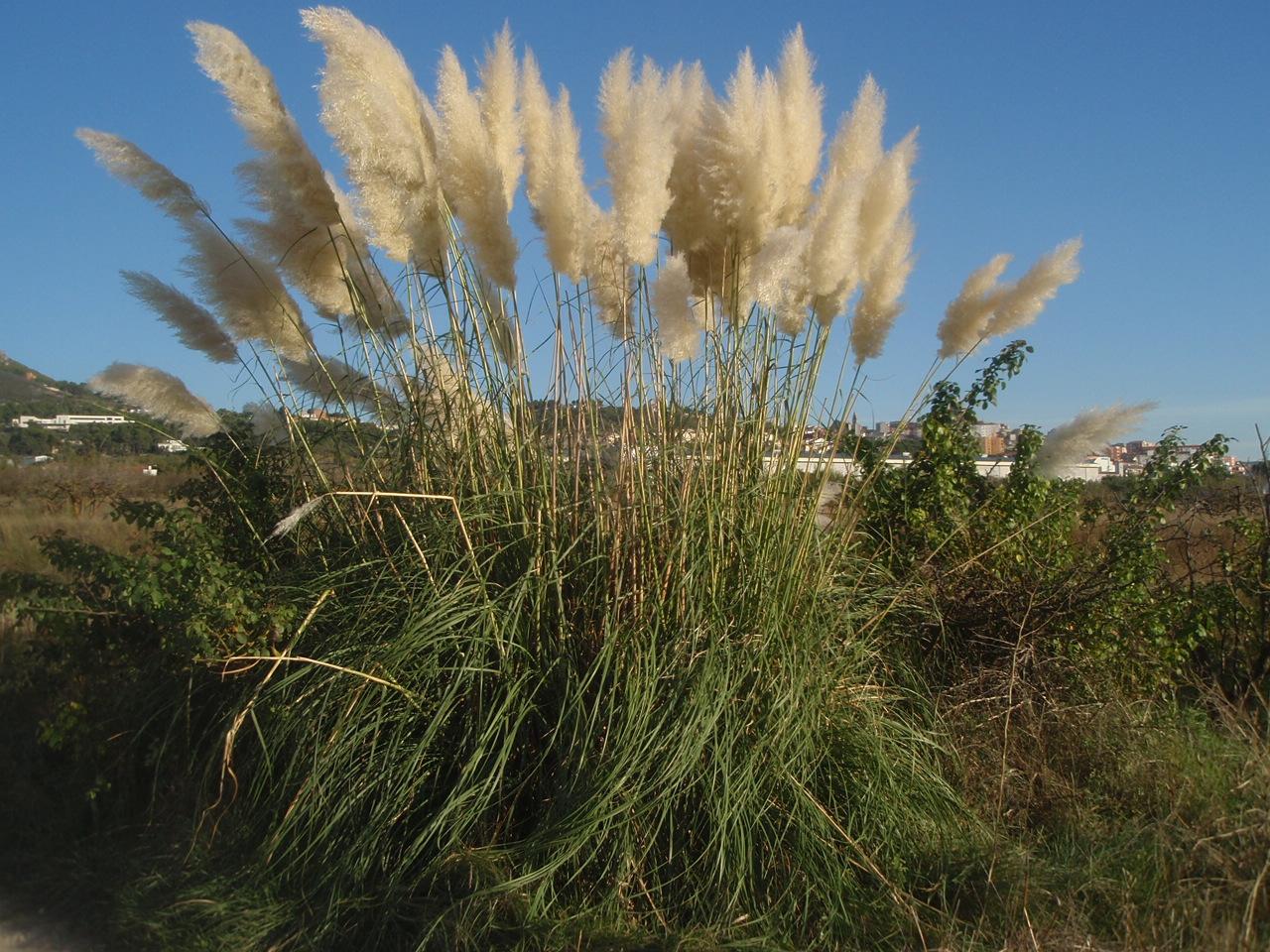 Paja en la hierba - 5 7