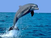 Resultat d'imatges de dofí