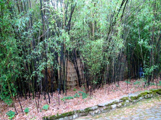 Garden Dancing Bamboo Beauty