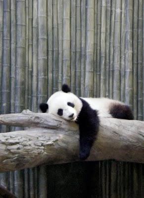 3 Blind Mice: Panda Mania