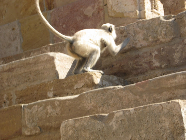 Modhera Sun Temple Gujarat Travel Tourism morning golden photography monkey