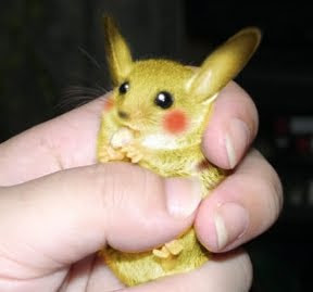 Pikachu in real life