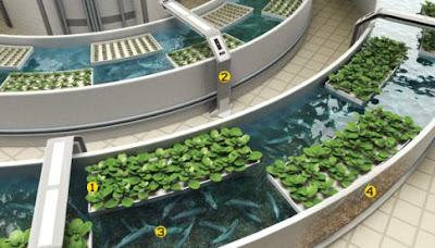 un cultivo hidropnico al parecer despus de este tiempo ocurre una adaptacin de la microflora a las condiciones y se empiezan a obtener