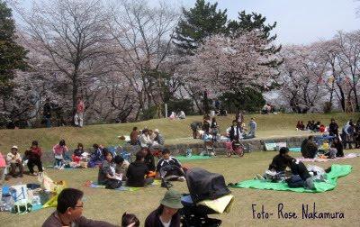 Parque enfeitado de sakura- Hanami
