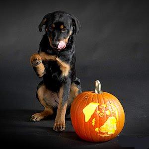 Dog Breed Jack O Lanterns Pumpkin Carving Posts Amp Links