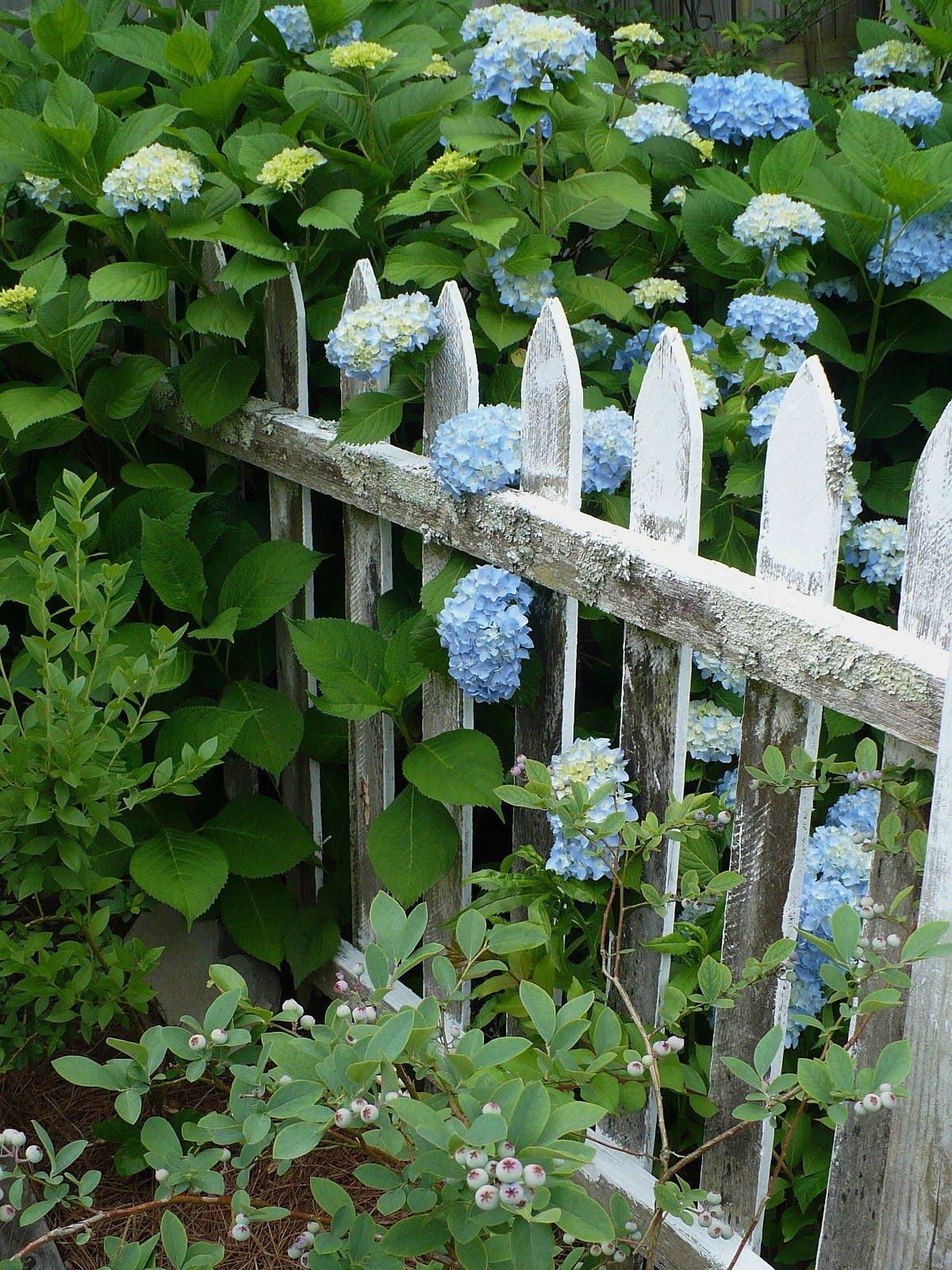 Hydrangeas Are Pretty A Cultivated Nest