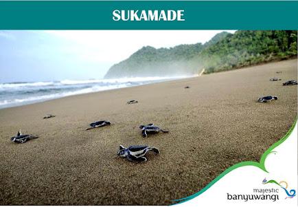 Sukamade Turtle Beach Banyuwangi