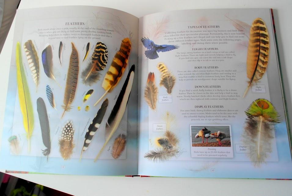 the nature explorers scrapbook review