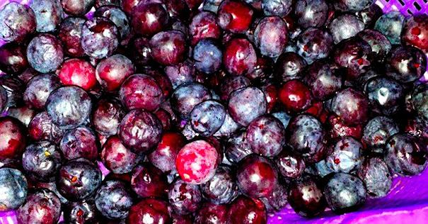 The kalumpit fruit. Image credit: Tagalog Lang.